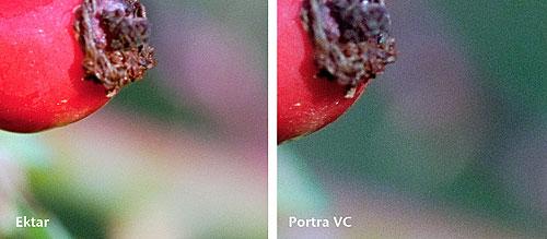 Korn im Vergleich - Ektar 100 und Portra 160 VC