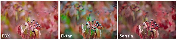 Farbwiedergabe des Ektar 100 im Vergleich