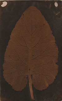 """""""Leaf"""" - Fotograf unbekannt; Credit Sotheby's New York"""