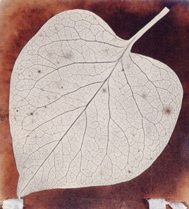 Foto William Henry Fox Talbot; Leaf, ca. 1840