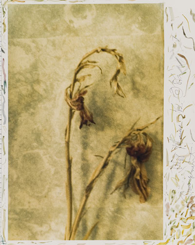 Foto Mark Morrisroe: Dried Arrangement, 1986