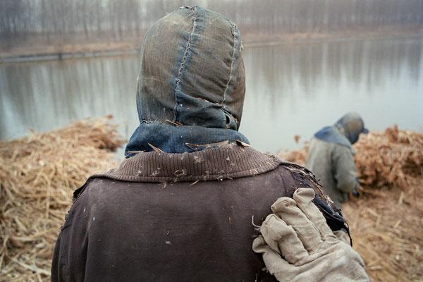 Foto Andreas Seibert, Schilfbündel werden von einem Lastkahn geladen und auf eine Baustelle gebracht. Provinz Jiangsu, 2011