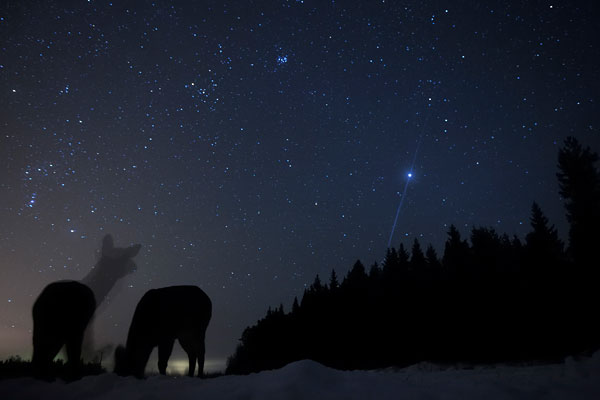 Foto Gesamtsieger Tommy Vikars, Finnland, Der Sterngucker