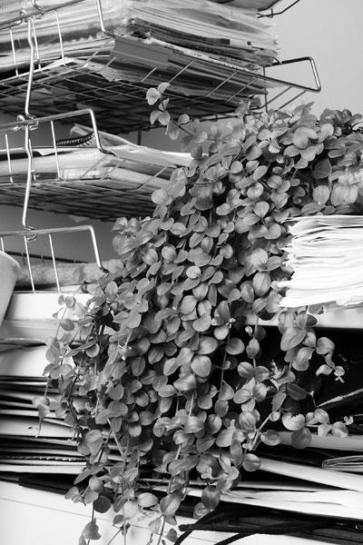 Foto Saskia Groneberg, aus der Serie Büropflanze