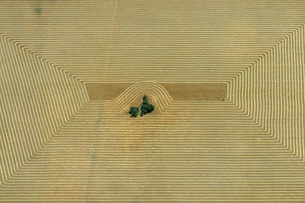 Foto Georg Gerster, Erntemuster in der Pampa, Argentinien, 1967
