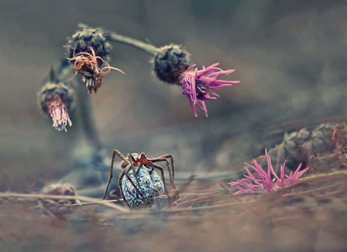 Foto Krasimir Matarov
