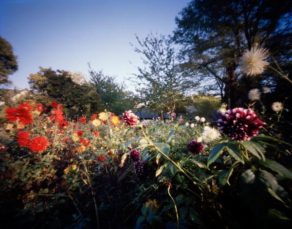 Foto Hanns Zischler, Das Blitzen der Blüten, 2010