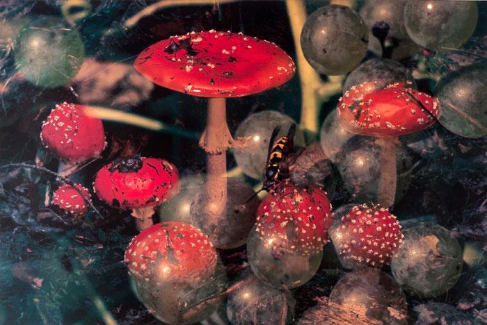 Peter Fischli / David Weiss, Pilze / Funghi 18,1997/98