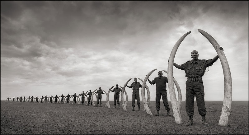 Foto © Nick Brandt, Line of Rangers With Tusks of Killed Elephants, Amboseli, 2011