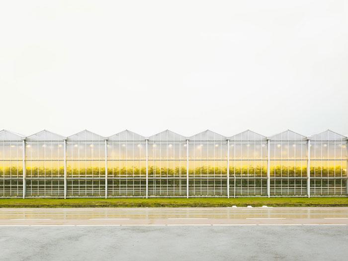 Foto Henrik Spohler, Gewächshaus mit Tomatenpflanzen, 2011