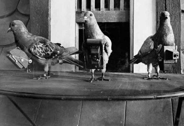 Foto Tauben mit Fotoapparaten