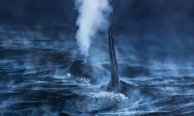 Audun Rikardsen als<br />Europäischer Naturfotograf 2016 ausgezeichnet