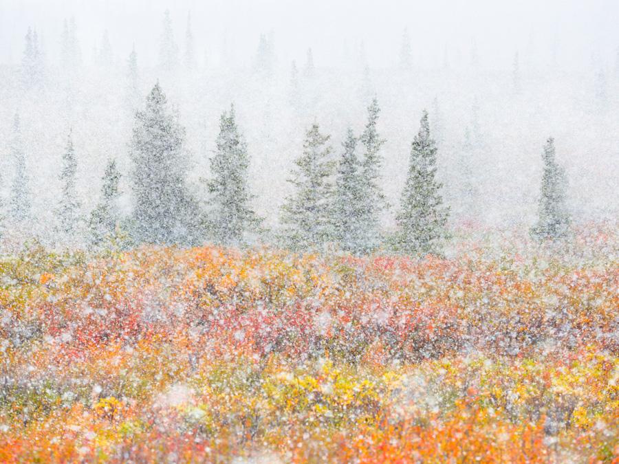 Fortunato Gatto - Wenn Herbst und Winter sich treffen