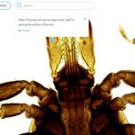 Eazy Zoom: Online-Plattform für Gigapixel-Bilder