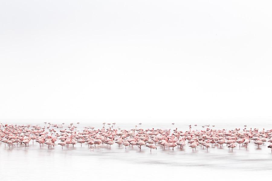 Wilde Tiere: Alessandra Meniconzi (Schweiz)