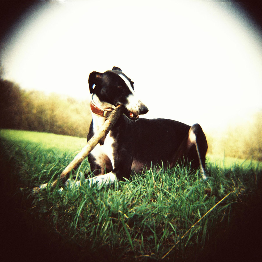 Lomography Diana F+ Sample Picture_19