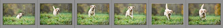 Nikon D850 Serienbild-Sequenz