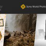 SWPA 2018: Drei Deutsche unter den Gewinnern des Offenen Wettbewerbs