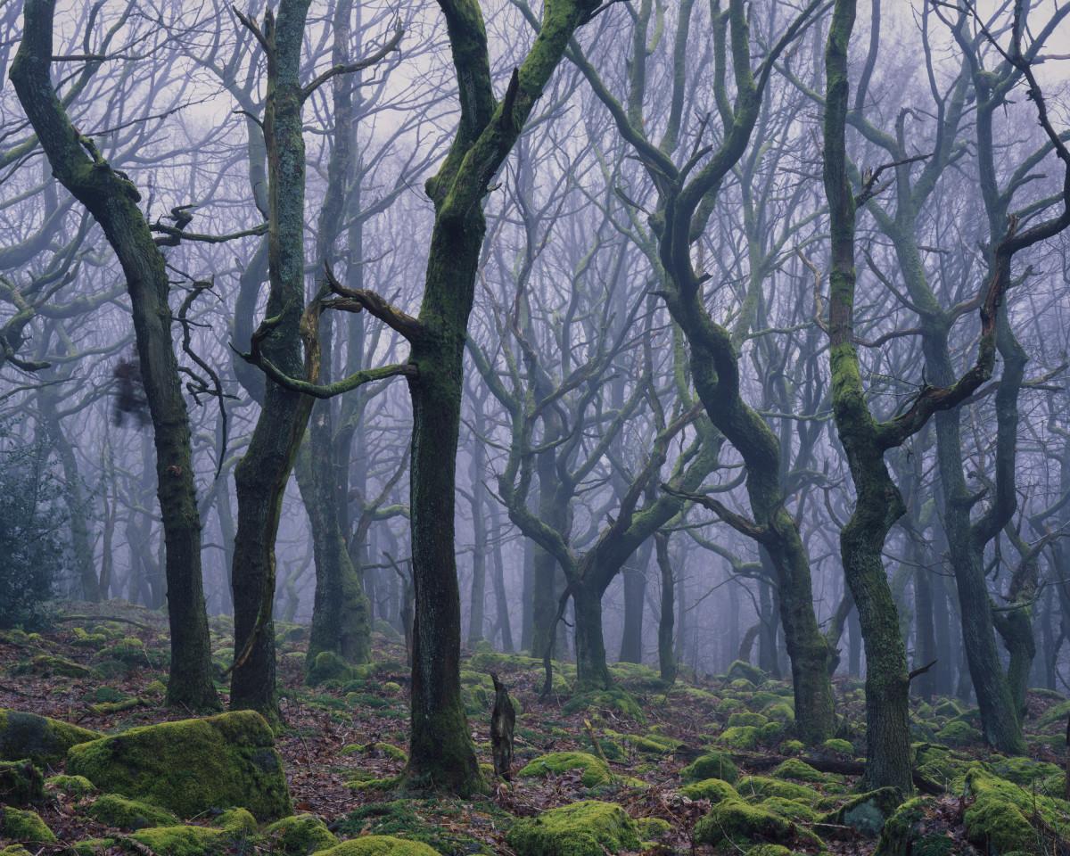 the_spiral_forest©garryridsdale_s_1200