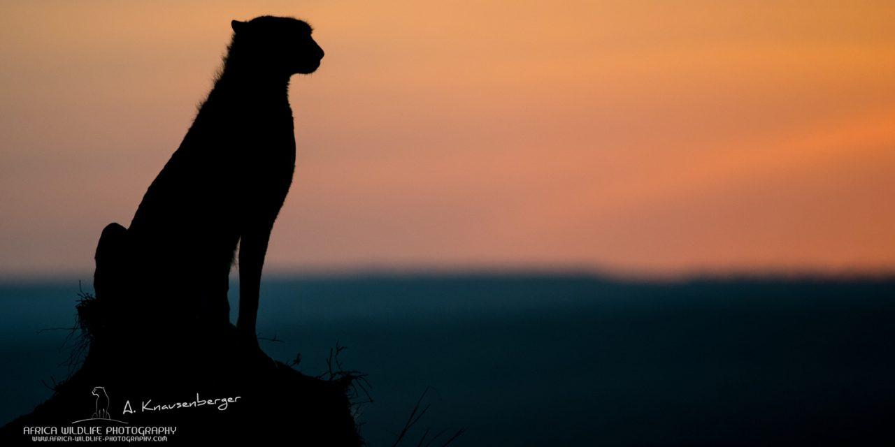 Mit Sigma auf Fotosafari nach Kenia (aktualisiert)