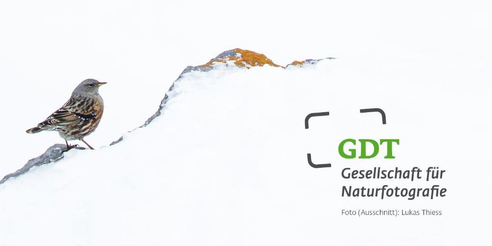 Gesellschaft Deutscher Tierfotografen erhält neuen Namen, bleibt aber GDT