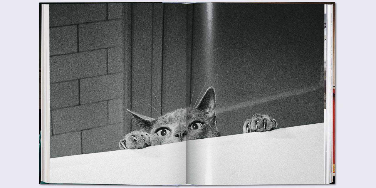 Walter Chandoha – Cats. Eine Hommage an den Katzenfotografen.