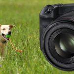 Canon EOS R: Autofokus mit aktueller Firmware erneut ausprobiert